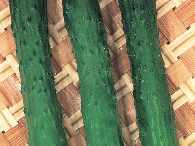 Esasem Semi Per Orto Cetriolo Tasty Green F.1 046