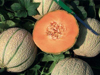 Esasem Semi Per Orto Melone Melgic F.1 082