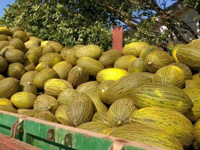 Melone Gran Riado F.1 2