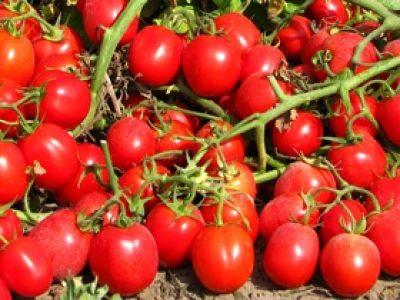 Wally Red F.1 Pomodoro
