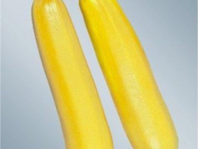 Lemona 1