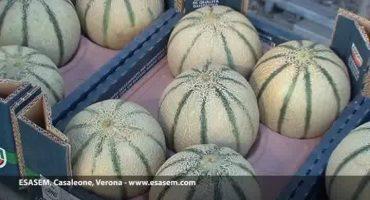 Sempre molto interessante ed attuale il mostra #melone #Charentais #Italiano!  ....