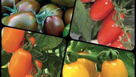 … anche quest'anno i #colori brillanti e variegati e l'ottimo #sapore dei nostri...