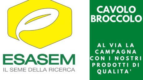 #CAVOLO #BROCCOLO    É ora di pensare ai