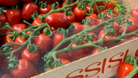#Pomodoro #SAMORI F.1  … una certezza in fatto di #sapore, #colore, #consistenza...