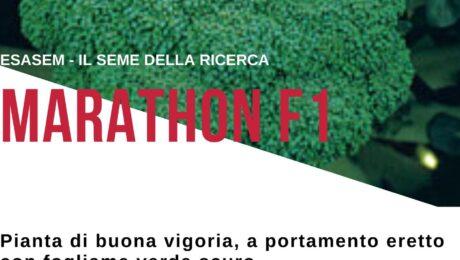 #MARATHON F.1  Il #Cavolo #Broccolo più coltivato d'Italia, un