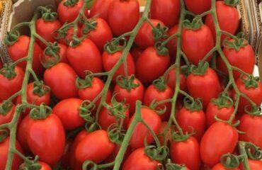 Pomodoro da mensa, avere tutto si può - Colture Protette