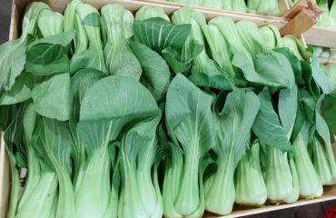 Il PAK CHOI è un cavolo cinese con foglie carnose e croccanti.  E' ricco di sali...