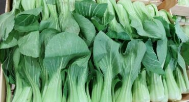 This is the link to the complete range of our #PakChoi: #ESASEM and #SAKATA #Sem ...