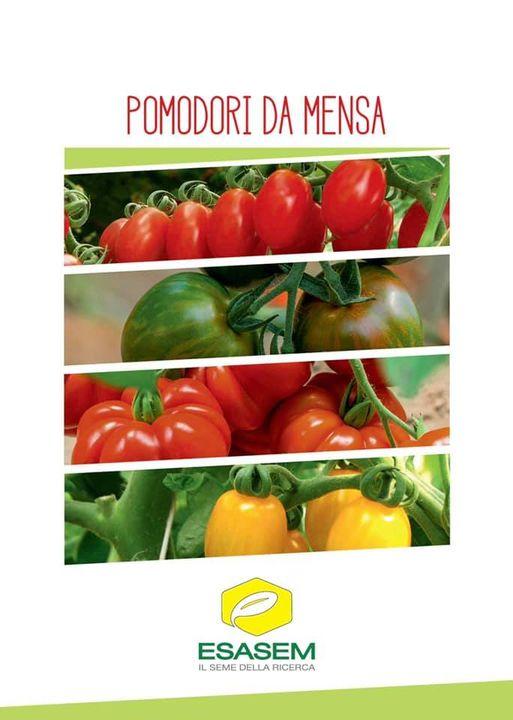 """""""#Pomodori da mensa"""" ce li abbiamo di tutti i colori e di tutte le forme, alta #..."""