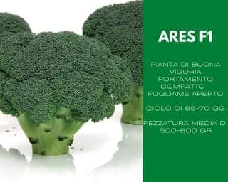 """It could be an image depicting the following text """"ARES F1 PLANT OF GOOD VIGOR COMPACT POSITION OPEN FOLIAGE CYCLE OF 65-70 DAYS AVERAGE SIZE 500-600 GR"""""""