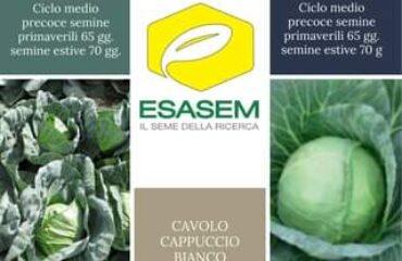 """Potrebbe essere un'immagine raffigurante il seguente testo """"ANNELISA F.1 Ciclo medio precoce semine primaverili 65 gg. semine estive 70 gợ. MONALISAF.1 Ciclo medio precoce semine primaverili 65 gg. ن semine estive 70 ESASEM IL SEME DELLA RICERCA CAVOLO CAPPUCCIO BIANCO www.esasem.com"""""""