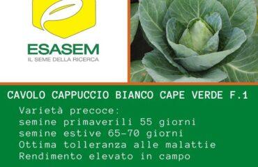 CAPE VERDE F1 La nostra #novità in fatto di #CAVOLO #CAPPUCCIO #BIANCO #APPUNTIT...